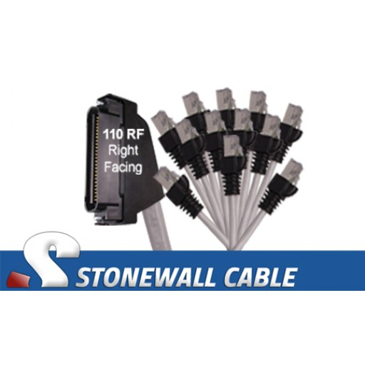 RJ21 Hydra Cable - Category 5e Telco 50 Male / 12 x RJ45